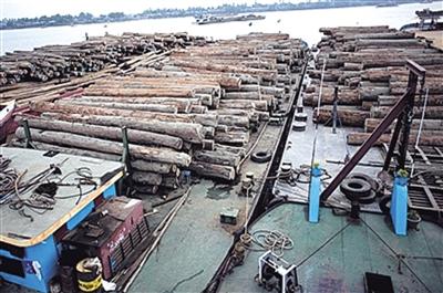中国一直是缅甸珍贵木材的重要海外市场之