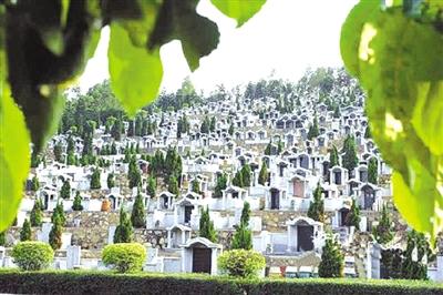 现代树葬场景布置