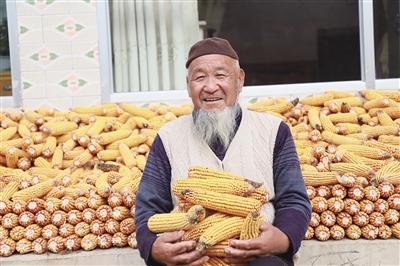 民和玉米产业丰收观网易彩票app安卓版官方下载察