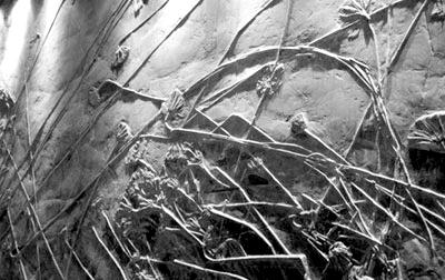 远古时代,关岭属于热带气候图片