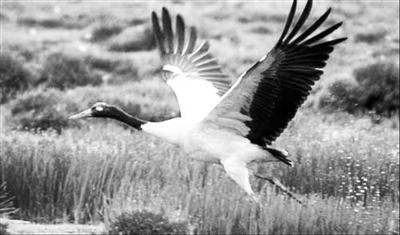 三江源地区动物分布