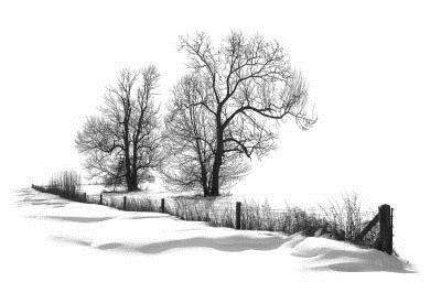 柳树素描的画法步骤
