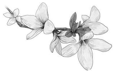 怎样画桃花树铅笔画