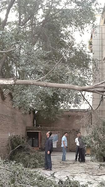 树枝断裂悬空 社区急忙排险